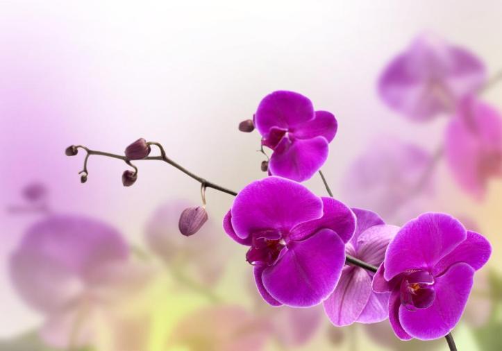 Orquideas N
