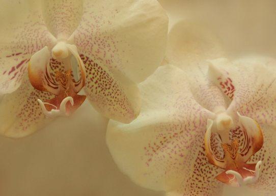 Gaby orquideas