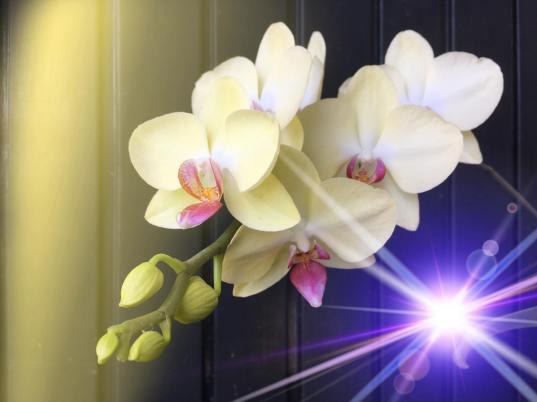 Katia orquideas